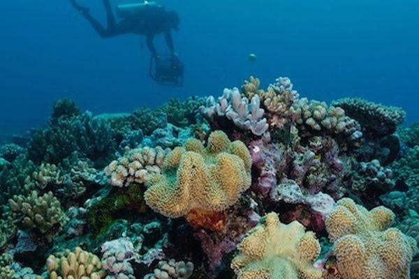 Corail en Polynésie française