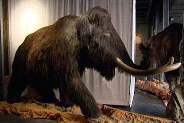 """L'exposition """"la Seine au temps des mammouths"""" est à découvrir à la Fabrique des Savoirs d'Elbeuf jusqu'au 9 mars 2014."""