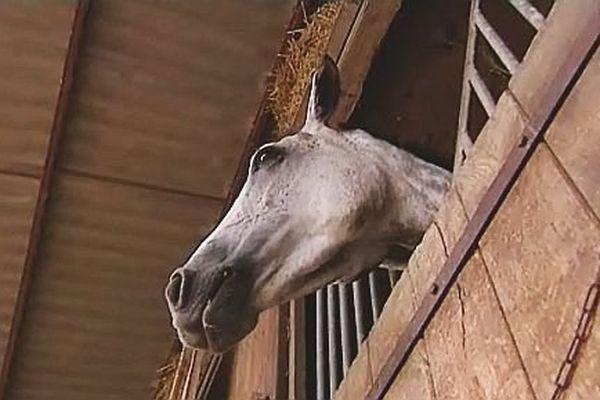 Un cheval dans son box (archives)