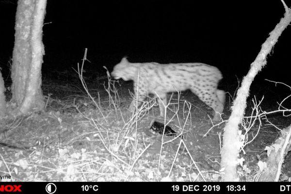 """Cette photo est prise par un chasseur qui a installé un """"piège photographique""""."""