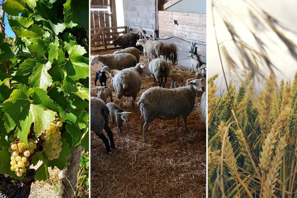 Vignerons, éleveurs et agriculteurs s'interrogent sur leur avenir et la façon de composer avec le réchauffement climatique.