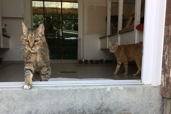 Le nombre de chats abandonnés explose cette année.