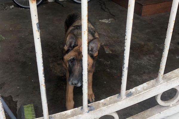 Avant d'être secourue, la chienne Malika passait l'immense majorité de son temps sous cette cage d'escalier