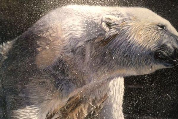 Ours blanc de Christine PULTZ