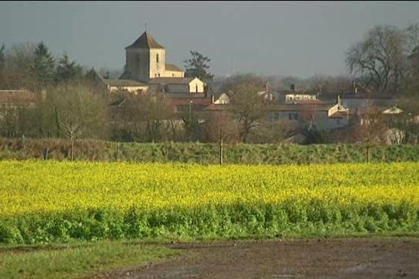 Conséquence de la douceur, les colzas sont déjà en fleur dans les champs du Poitou-Charentes.
