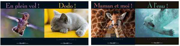Collection Petit Focus, Chocolat Jeunesse Editions !