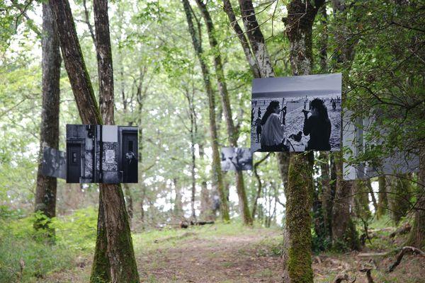 Dans une forêt majestueuse et paisible, le spectateur chemine et son esprit voyage...