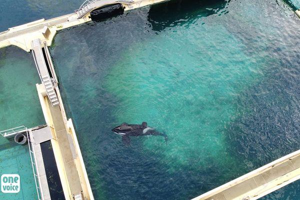 One Voice estime que l'orque Inouk souffre gravement de ses conditions de captivité.