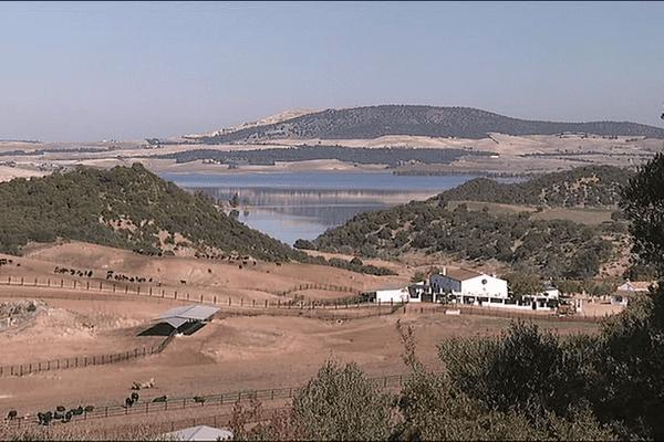Les toros de la ganaderia de Fuente Ymbro (San José Del Valle, Cadix) seront présents à la San Fermin 2014