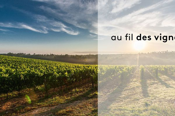 Au fil des vignes, à l'heure des vendanges.