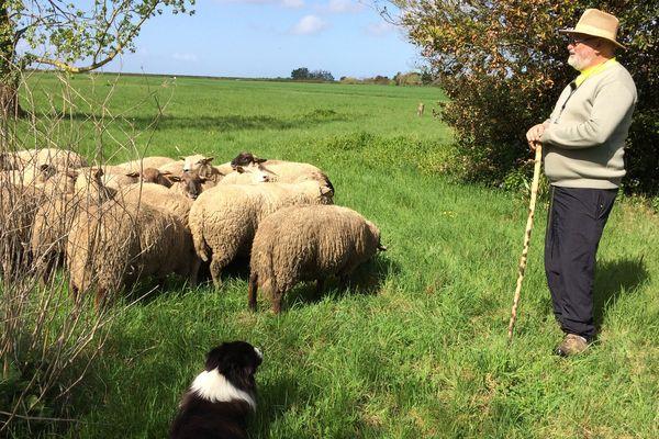 Une centaine de moutons vont pâturer dés cette semaine sur les friches des zones démolies après la tempête Xynthia