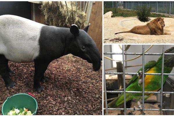 Des animaux sont fréquemment recueillis au zoo-refuge La Tanière, près de Chartres.