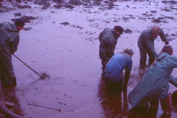 Le nettoyage des plages bretonnes est vain après le naufrage de l'Amoco Cadiz. Chaque marée fait remonter le pétrole.