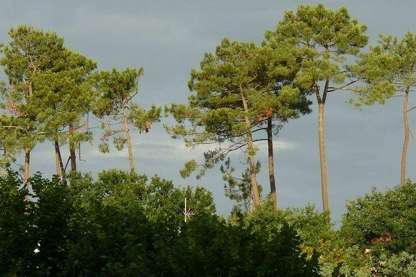Le massif forestier des Landes (Landes, Gironde et Lot-et-Garonne) est le plus grand massif forestier d'Europe, avec plus d'un million d'hectares de pins maritime.