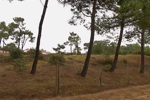 La municipalité a mandaté l'ONF pour verbaliser ceux qui détruisent les arbres