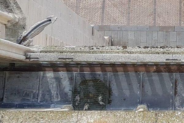 Sur les hauteurs de la cathédrale de Sens, des pièges-trappes sont utilisés pour capturer les pigeons