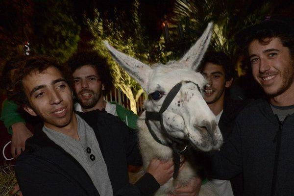 Serge le lama, la nouvelle star des réseaux sociaux, sera à Cannes vendredi soir