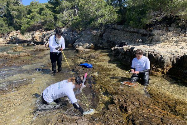 Les chercheurs de l'université Nice Côte d'Azur sur l'île Sainte Marguerite, Cannes (Alpes-Maritimes) se préparent à installer des supports en pierres qui serviront d'abris aux algues brunes.