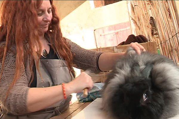 Sandrine brosse Mickey, un lapin angora de son élevage pour récupérer, avec douceur, son poil qui lui servira de laine à tisser.
