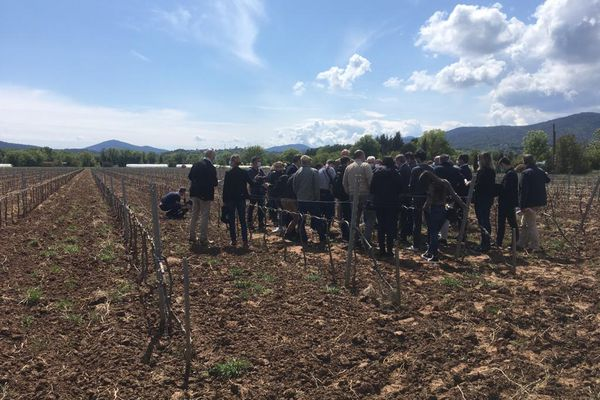 Visite d'une délégation conduite par le préfet du Var sur les exploitations agricoles sinistrées par le gel.