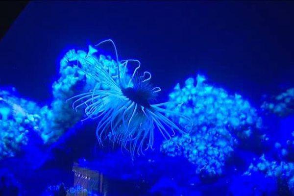 Plongée au fond des océans à l'Aquarium de La Rochelle
