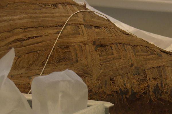 Une momie d'oiseau conservée au musée des Confluences (Lyon)