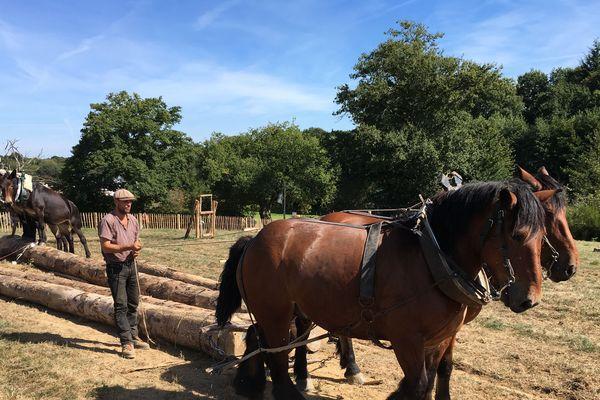 Le cheval peut tracter des charges lourdes dans tous types de terrains