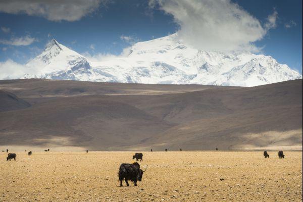 Le Shishapangma, au Népal, est l'un des sommets les plus hauts du monde.