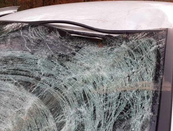 Des poils sont restés coincés dans la vitre après la collision.