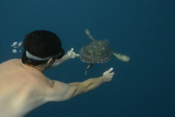 Lâcher de tortues au large d'Argelès-sur-mer