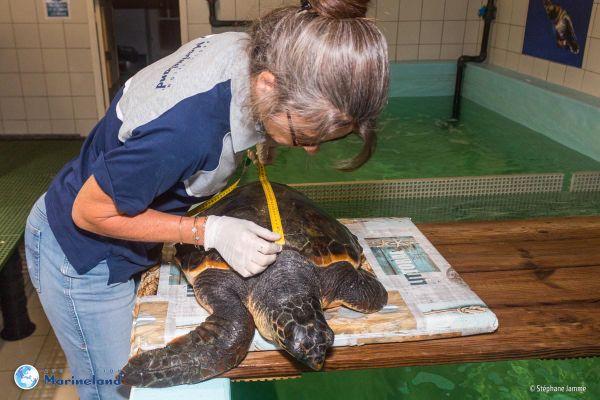 L'animal a été mesuré, pesé et examiné sous toutes les coutures à son arrivée dans le centre.