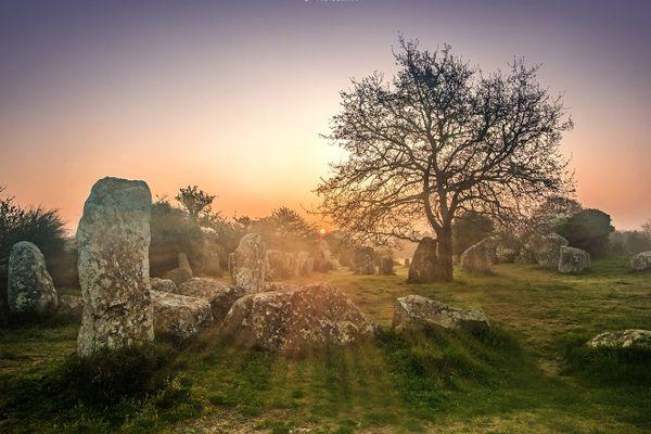Soleil d'hiver sur les menhirs de Kerzerho - Erdeven - Morbihan