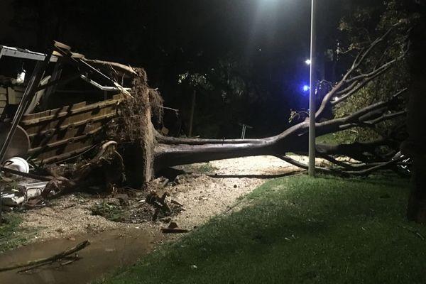 Il a fallu tronçonner cet arbre, tombé sur la chaussée pendant les intempéries.