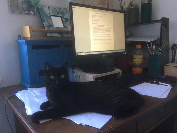 Télétravail ou pas, Tardis prend ses aises sur le bureau de sa maîtresse.