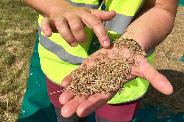 C'est la première fois que les graines de cette prairie sauvage sont récoltées.