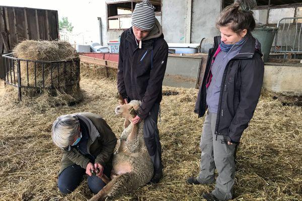 Claire-Anne et Jeff ont choisi de passer la période de confinement chez une éleveuse de brebis de La Mure, en Isère