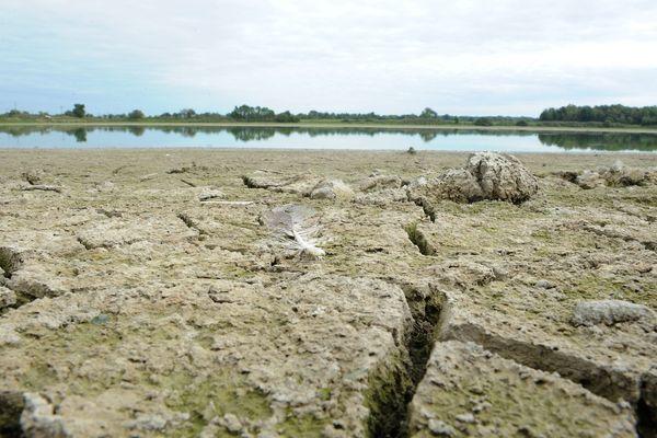 La première région piscicole d'étang de France, la Dombes dans l'Ain subit de plein fouet la canicule. Les professionnels sont inquiets, la survie de la filière pourrait être menacée.