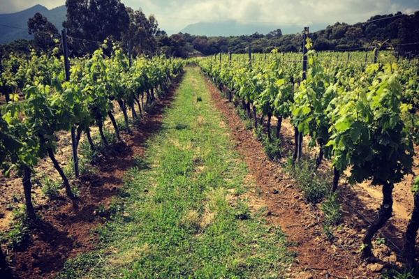 Situées à Saint-Antoine, dans l'arrière-pays de Ghisonaccia, les vignes sont plantées sur un sol argileux.