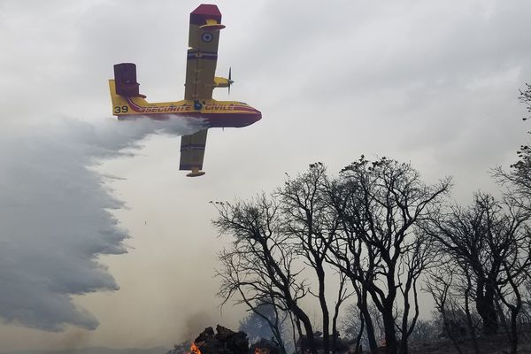 L'incendie près de Hyères a mobilisé 150 hommes du feu, deux Canadair et deux trackers, ce vendredi 14 juin.