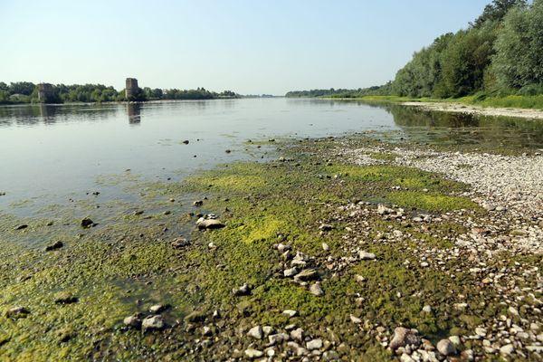 Les cyanobactéries peuvent donner lieu à des colonies massives sur les bords de Loire.