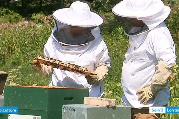 Des particuliers ou des entreprises peuvent financer des ruches pour les apiculteurs.