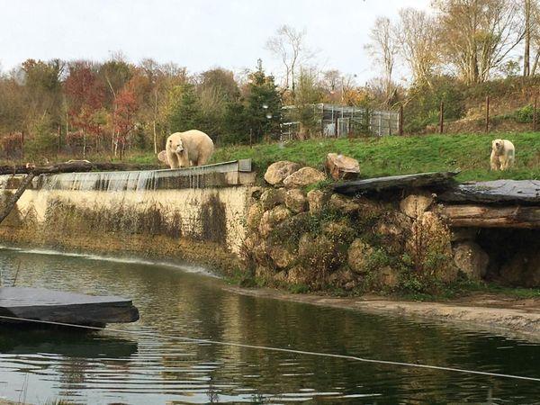 Les ours évoluent dans un enclos de près d'un hectare au Cerza, près de Lisieux.