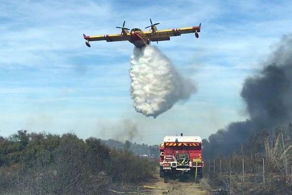 Au cours de l'été 2019, 1 224 hectares de forêts et de garrigues ont été emportés par les flammes dans l'Hérault.