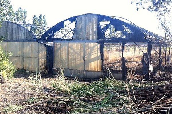 Saint-Hippolyte (Pyrénées-Orientales) - 600m2 de serres détruits après un écobuage mal maîtrisé - 12 juin 2013.