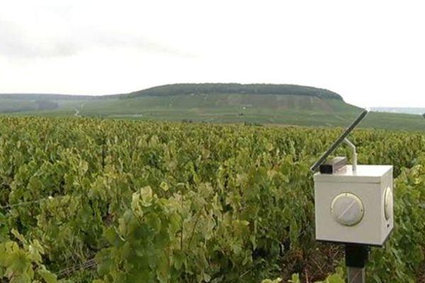 De la musique dans les vignes...