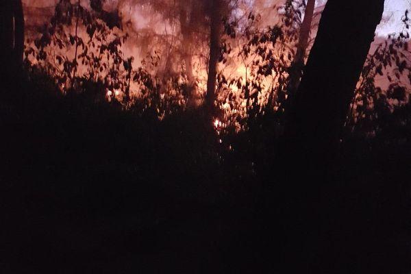 Les flammes ont ravagé 250 hectares de végétation à Beaume-de-Venise