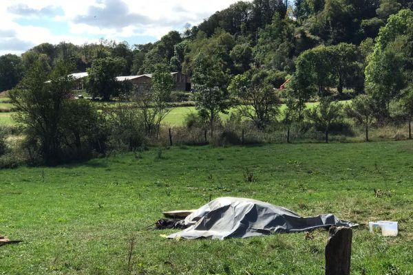 Une jument a été retrouvée morte et mutilée dans un pré à Riom-ès-Montagnes dans le Cantal, samedi 5 septembre.