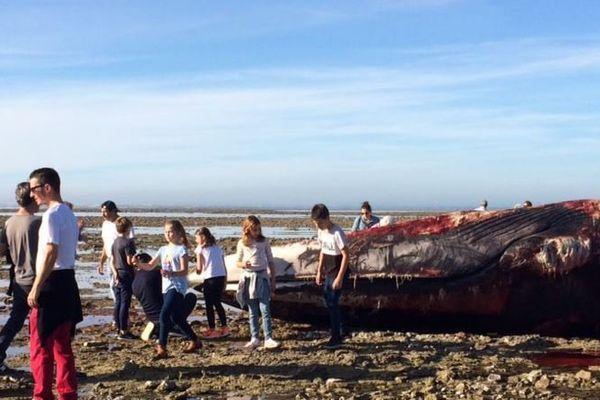 Beaucoup de curieux autour du cadavre de la baleine échouée sur l'île de Ré.