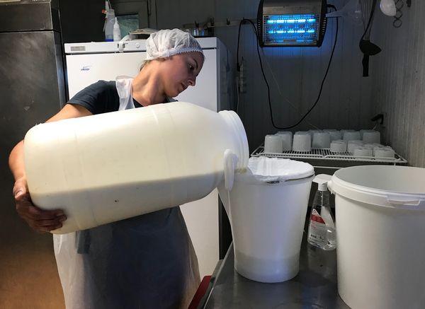Charlène transforme tout le lait de ses brebis