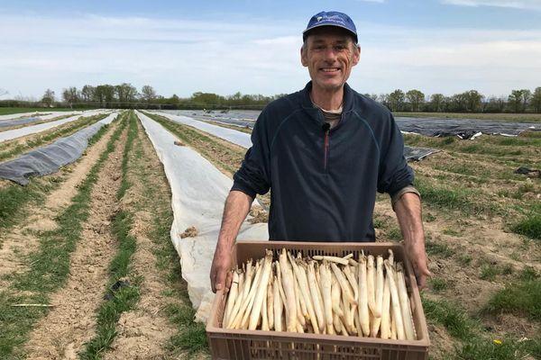 La récolte des asperges a débuté chez Dominique Marchal, maraîcher de l'Allier.
